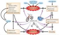 El ejercicio durante la enfermedad renal